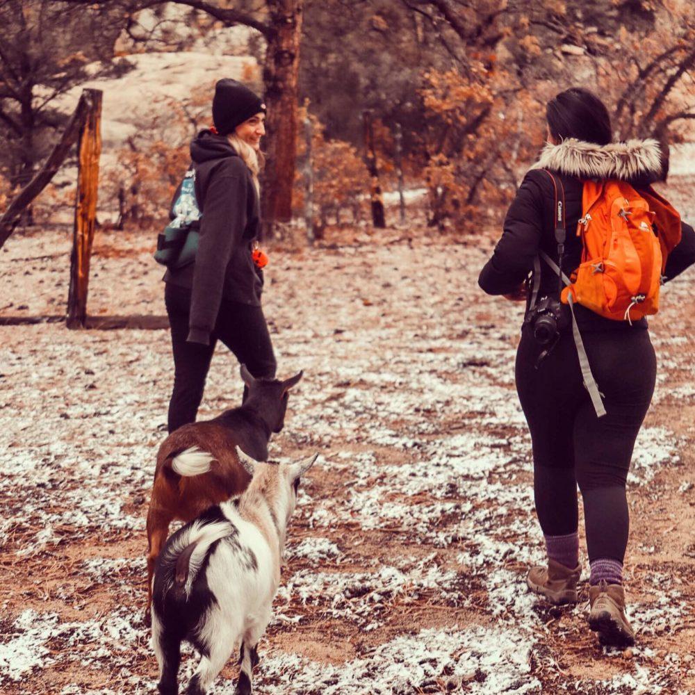 "Taos County ""Community Goat Hikes"""