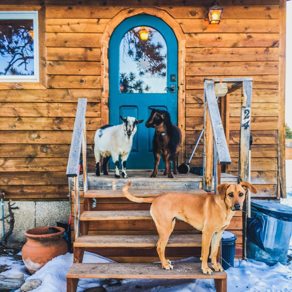 Welcome to The Little Goat Outpost                           Hosting Goat Hikes + Camping Sites in Tres Piedras, New Mexico